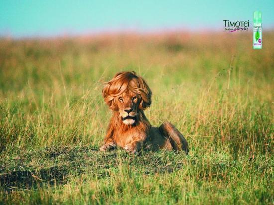 Leu cu peruca