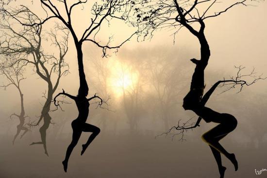Trees dancing