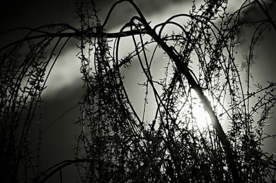noapte abstracta