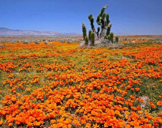 California - Mojave desert
