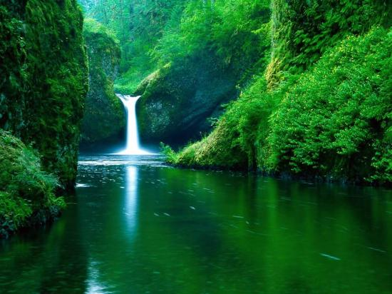cascada-in-jungla
