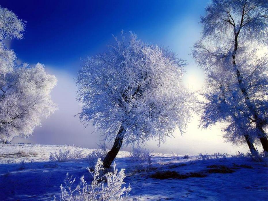 morning-winter