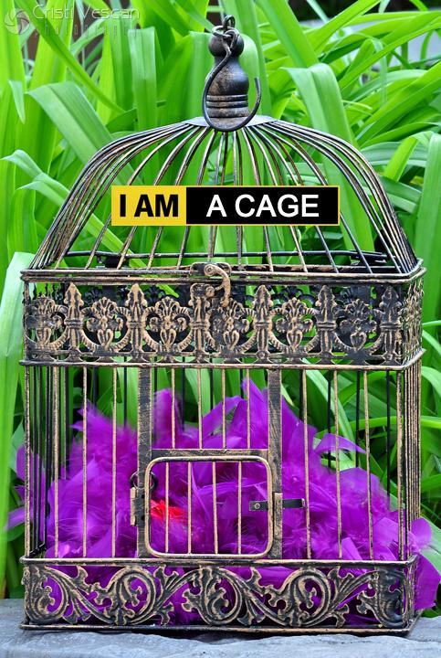 $$$ cage