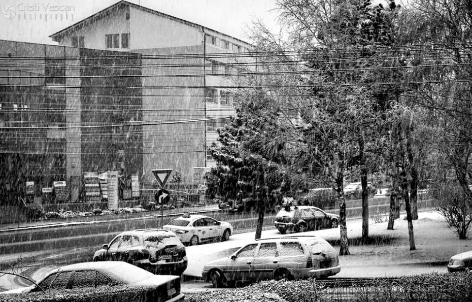 zapada mieilor - martie 2012