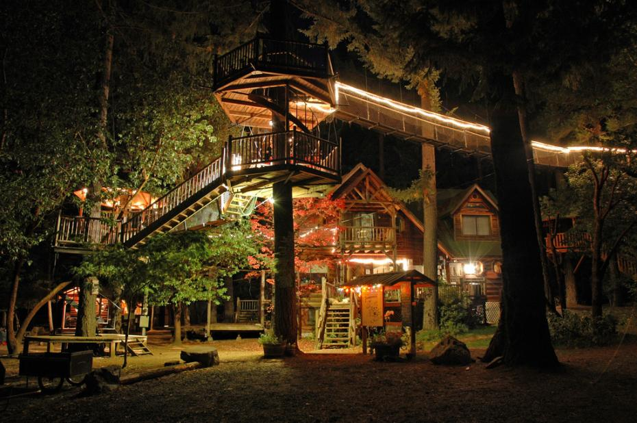 forest-house-house-tree-dream-nature-lights-night-Favim.com-326074