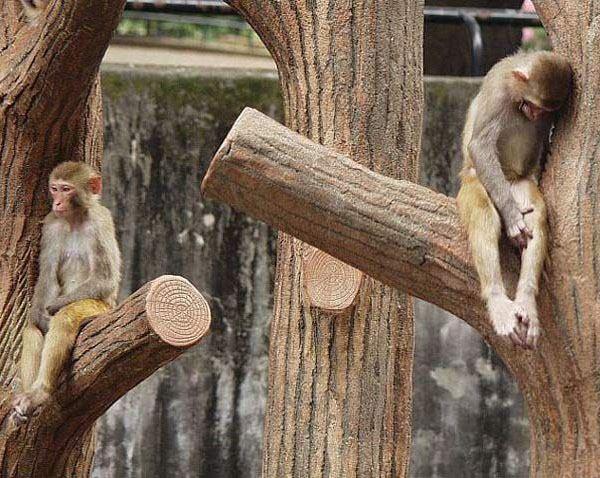 Maimutice