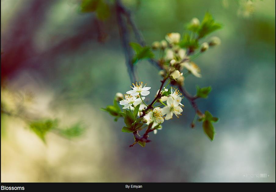 copacinflorit