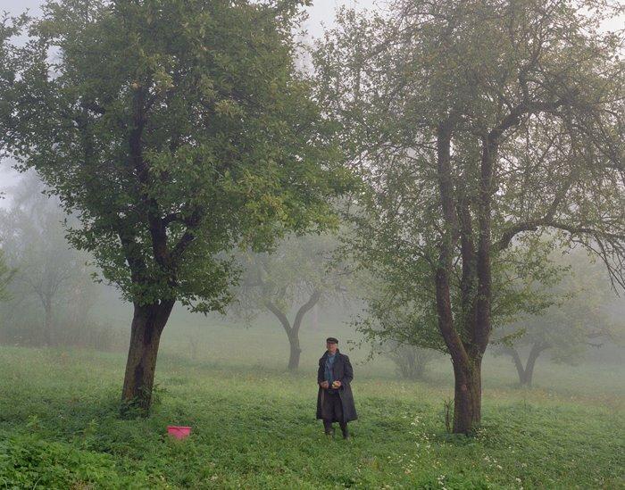 verde din Transilvania