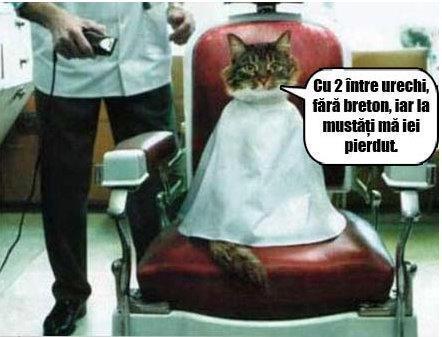Pisica la frizer