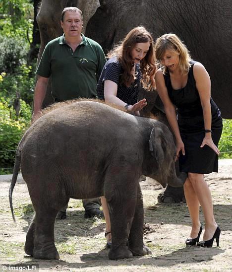Elefant afemeiat