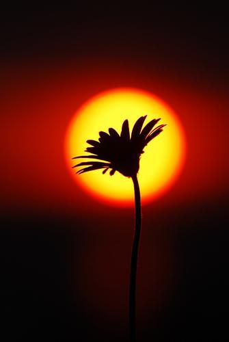rasarit-de-soare-imbratisand-o-floare