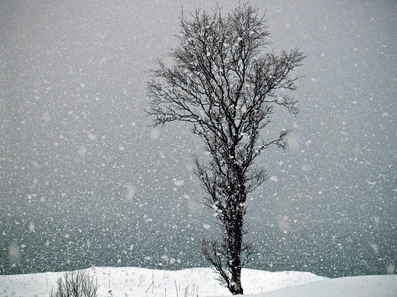 tree_snowing