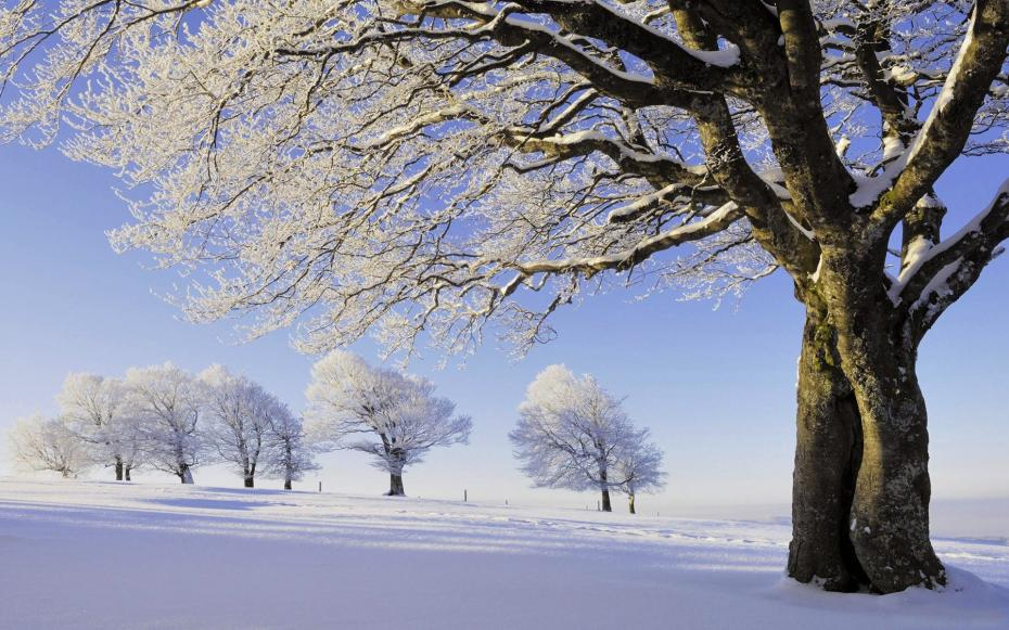 trees-winter-snow-frost
