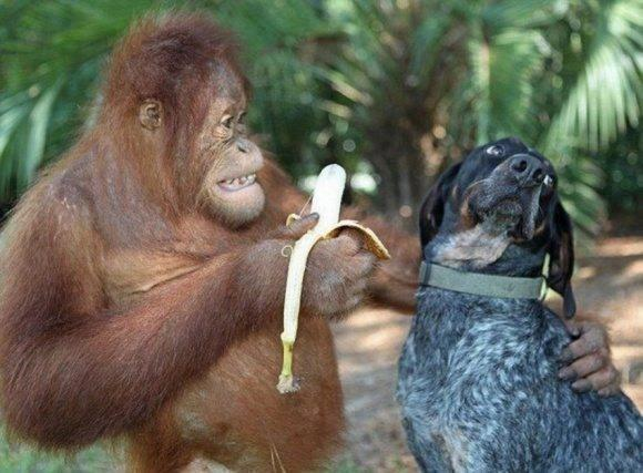 Keep calm and eat a banana!