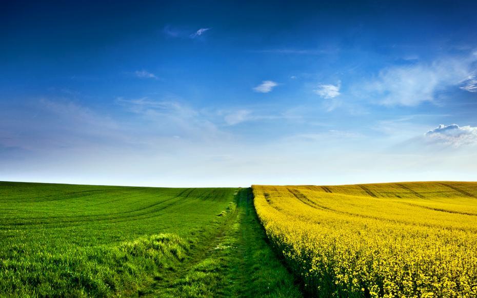 yellow-green-field