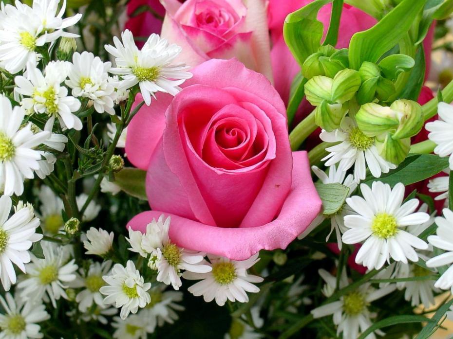 floare_printre_flori-1502