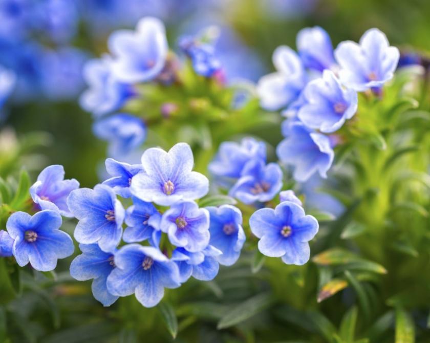 flori-de-gradina-840x670