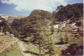 16 4 2001 - Al Arz - the Ceaders - Lebanon