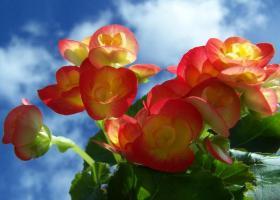 cer cu flori